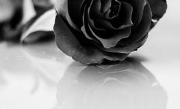 Numele trandafirului