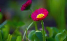 Floare rece4 263x160 Anul ce a trecut